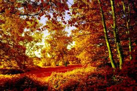 amusement parks park autumn parks nature trees hd wallpapers for