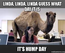 Hump Day Meme - linda linda linda guess what day it is it s hump day hump day