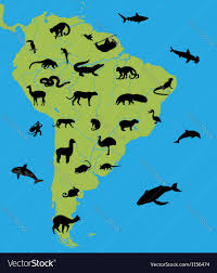 Maps Of South America by Animals On The Map Of South America Royalty Free Vector