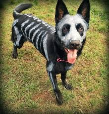 Skeleton Bones For Halloween by Pet Owners Use Non Toxic Face Paint To Turn Their Animals Into