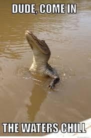 Alligator Meme - alligator humor alligator bro dude come in the waters chill1 jpg