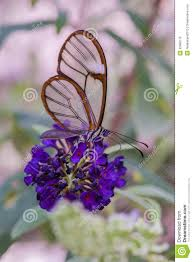 butterfly with flowers royalty free stock image image 33988116