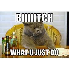 Cat Meme Maker - poker cat biiiiitch what u just do meme generator polyvore