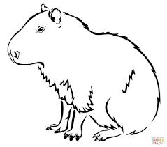 newt coloring page free coloring kids 4115