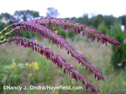 native plants names what u0027s in a name body talk hayefield