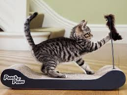 Cat Gyms 10 Best Cat Scratchers The Independent