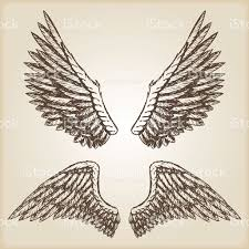 hand drawn vector vintage illustration naturalistic spread wings