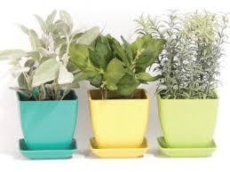 best 25 herb garden kit ideas on pinterest indoor grow kits