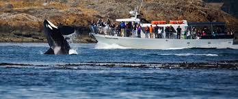 Washington wildlife tours images Whale watching san juan islands san juan safaris jpg