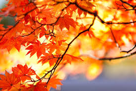 free red leaf of autumn images and stock photos freeimages com