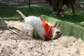 how to stop a dog from digging holes everywhere smart pet toys