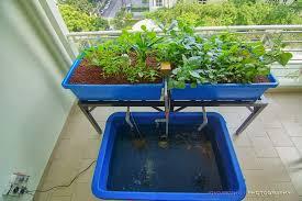affnan s aquaponics perng leng chuah high rise aquaponics system