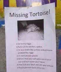 Turtle Meme - missing turtle meme guy