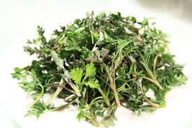 herbes cuisine free images flower food herb produce coriander