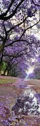top 18 beauty spring flower pictures u2013 creative digital