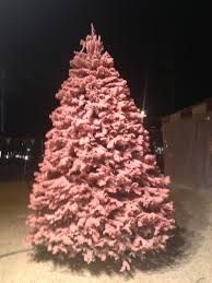 snowy pines christmas trees about our services