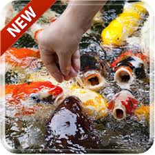 koi free live wallpaper apk koi free 3d live wallpaper android apps on play