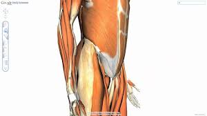 Google Body Anatomy Adamianis Anatomia Google Body Browser Youtube