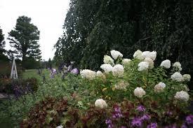 White Hydrangeas Hydrangeas 10 Best Flowering Shrubs To Grow Gardenista