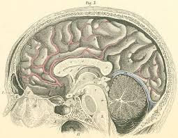 Right Side Human Anatomy Anatomy Atlases Atlas Of Human Anatomy Plate 24 Figure 3