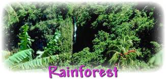 Dominant Plants Of The Tropical Rainforest - types of rainforests
