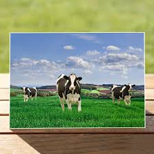 cow greeting cards birthday cards archives oak greeting cards wisconsin s