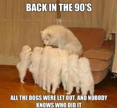 Funny Puppy Memes - funny pet memes