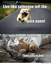 Dog In Bed Meme - dog philosophy meme shuffle pinterest dog animal and doggies