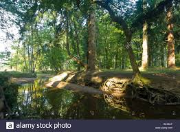 rhinefield ornamental drive new forest uk stock photo royalty