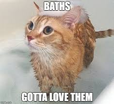 Meme Kitty - image tagged in cats meme kitty bath memes funny memes imgflip