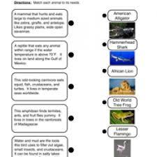animal needs worksheet 2