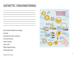 genetic engineering worksheet and answer key by mizzzfoster