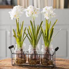 faux orchids faux flowers joss