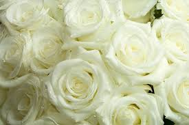 Sympathy Flowers Message - shopping online for sympathy flowers flower pressflower press