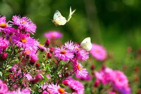 flower butterfly garden park beautiful flowers greenery spring