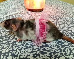 Ferret Halloween Costumes Ferret Clothes Etsy