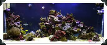 Aquascape Online Aquascaping Show Your Skills Reef Central Online Community