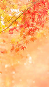 autumn halloween background 1043 best autumn season thanksgiving fall images on
