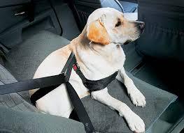 porta cani per auto trasportare il in automobile cosa dice la legge