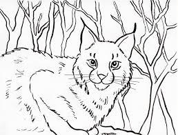 bobcat coloring page samantha bell