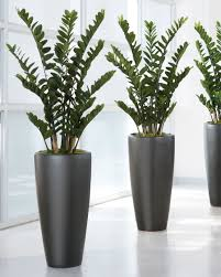Home Plant Decor by 4 U0027 Zz Silk Plant For Distinctive Business And Home Decorating At