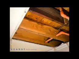 cape fear flooring and restoration mold fayetteville