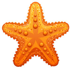 starfish clipart for kids collection