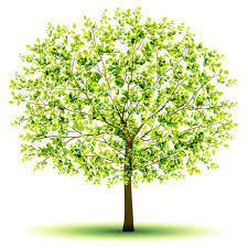 creative green tree design vector graphics 03 free millions