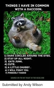 Raccoon Excellent Meme - things i have in common with a raccoon 1 dark circles around the