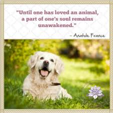 the loss of a pet loss of pet quotes