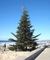 o b christmas tree that keeps on giving san diego reader