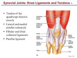 Lateral Patellar Ligament Human Anatomy U0026 Physiology Sixth Edition 8 Joints Ppt Download