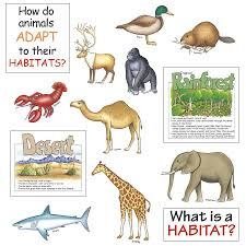 bulletin board set animal habitats eu 84753