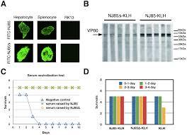 atomic model of rabbit hemorrhagic disease virus by cryo electron